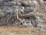 Ιερό της Αφροδίτης - Ωρίωνας Μ